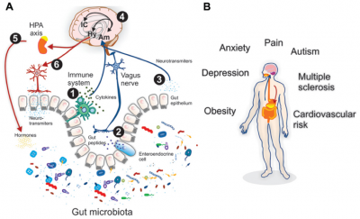 Microbiota and Autistic Diseases